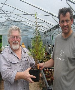 Allen Lowrie with Triffid Nurseries Roridula dentata