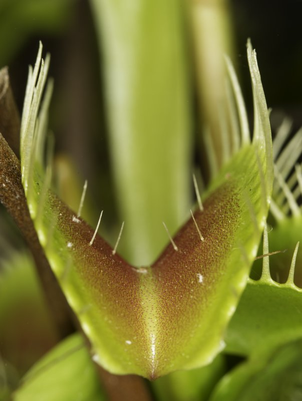 VFT 